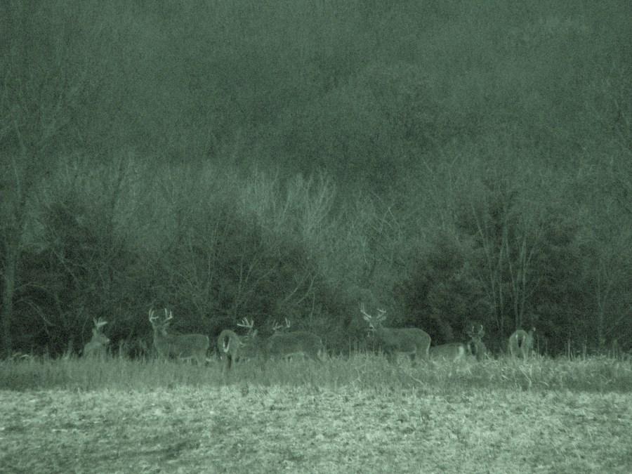 12 13 Farm 308 (900 x 675).jpg