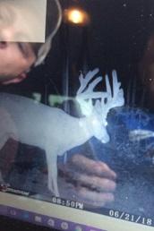 3 friend deer.JPG