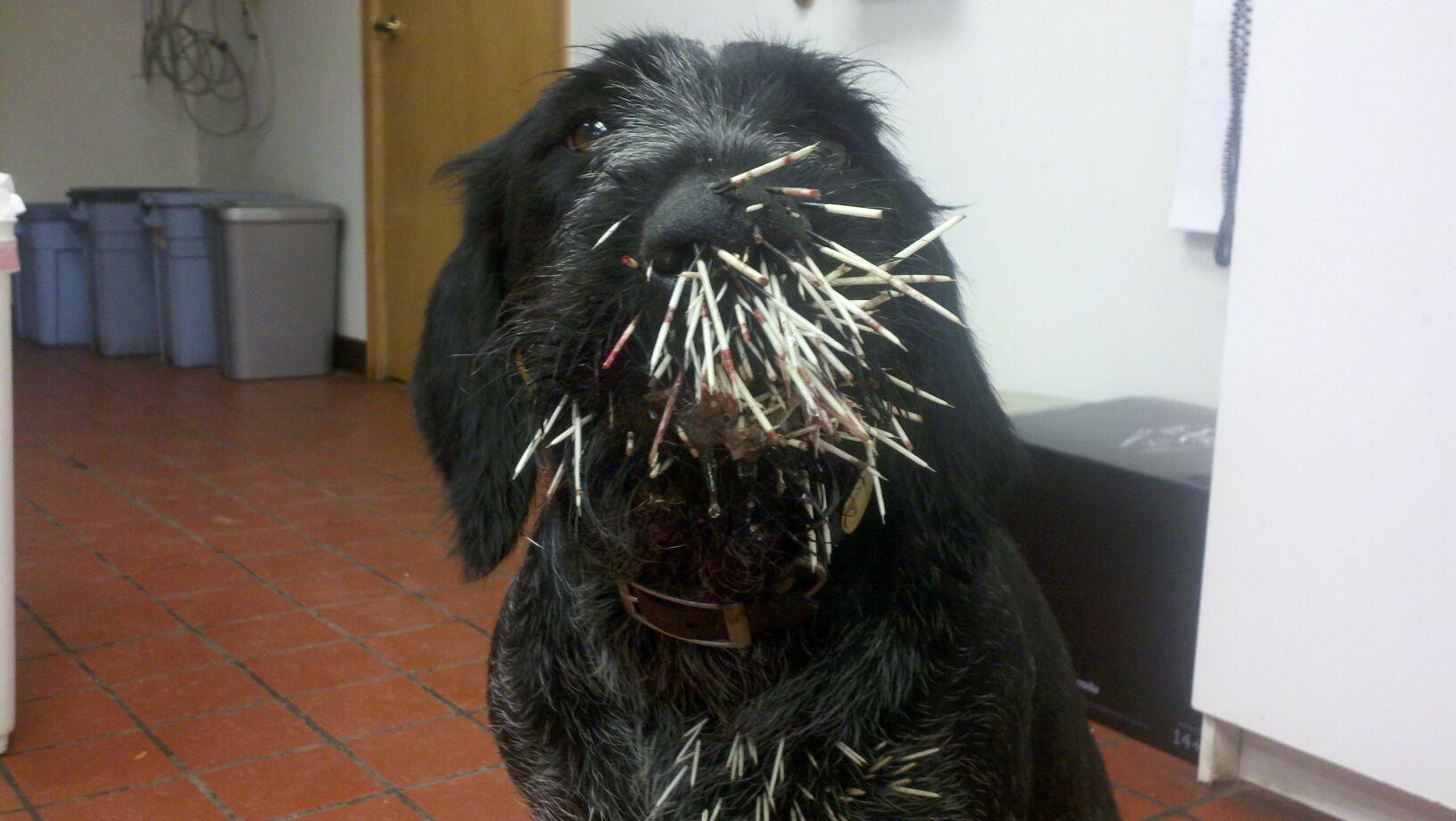 Aly Face Full of Quills 040812.jpg