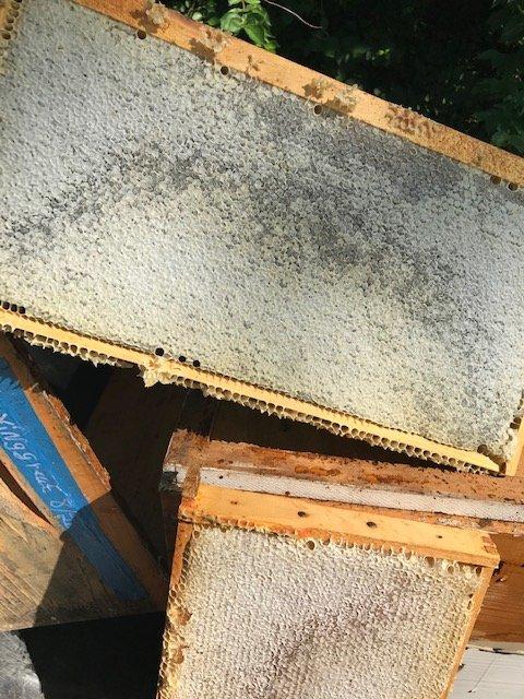 capped honey.jpg