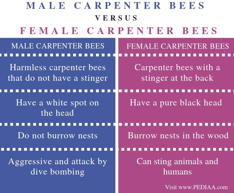 Difference-Between-Male-and-Female-Carpenter-Bees-Comparison-Summary.jpg