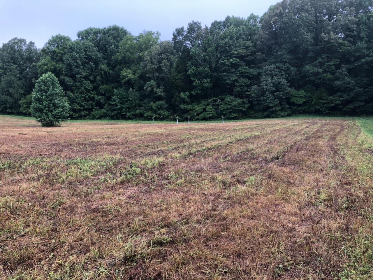 Field 1 7-21-18 (2).jpg