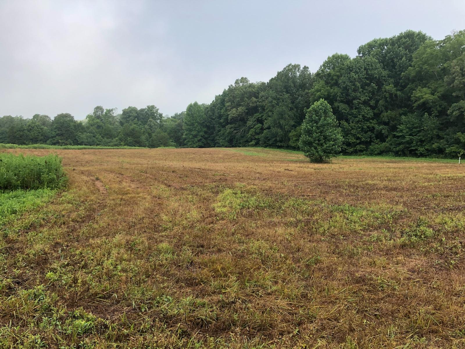 Field 1 7-21-18.jpg