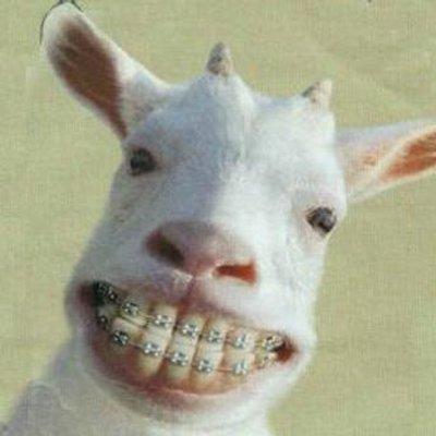 Goat1.jpeg