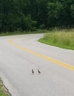 quail road.jpg