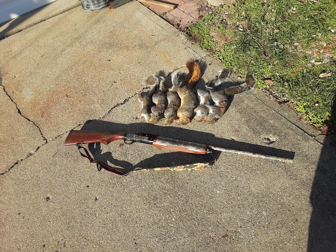 squirrel20201i.jpg
