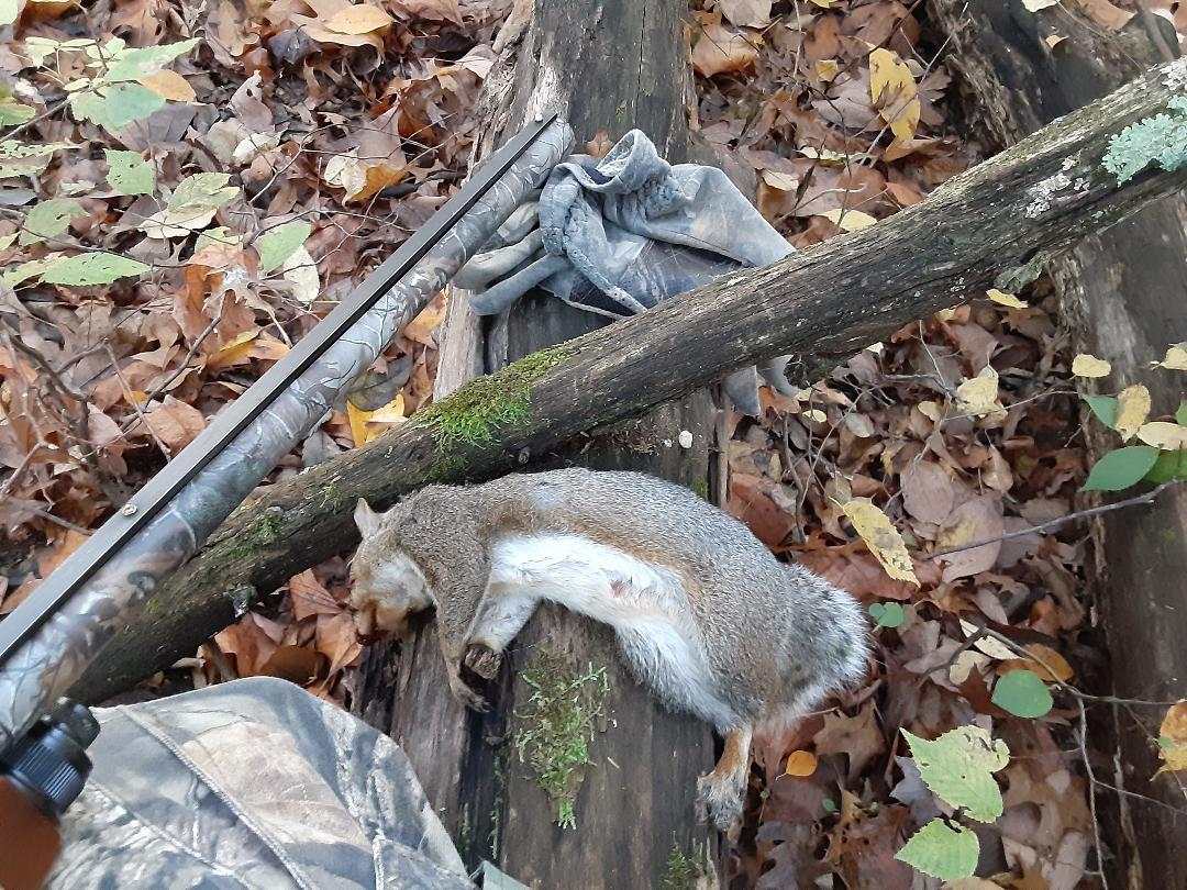 squirrel2020w.jpg